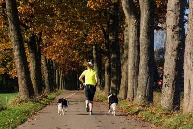 jak biegać z psem